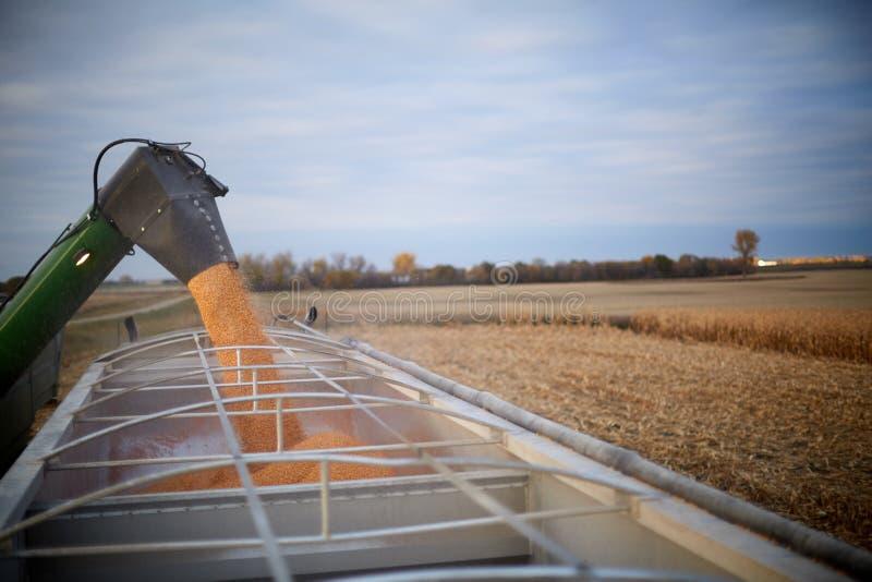 Maaidorser vullend een het wachten landbouwbedrijfvrachtwagen royalty-vrije stock afbeeldingen