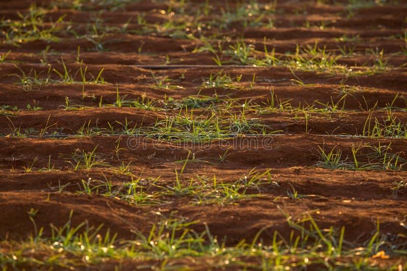 Maalde rood met groen gras royalty-vrije stock afbeeldingen