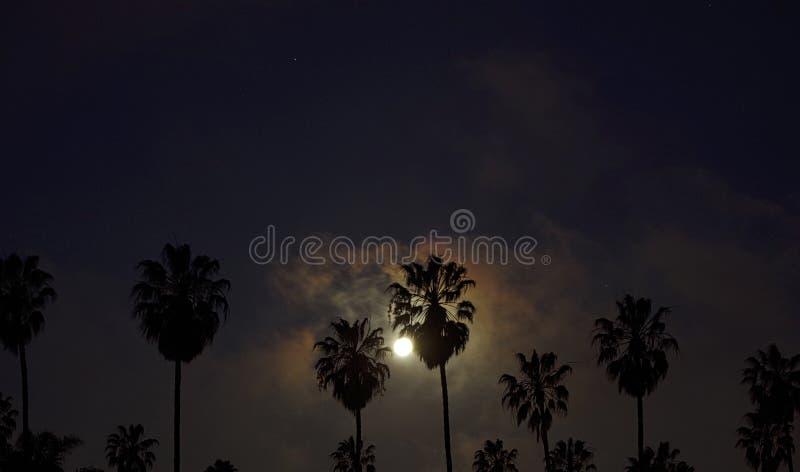 Maan achter Palmen royalty-vrije stock afbeeldingen