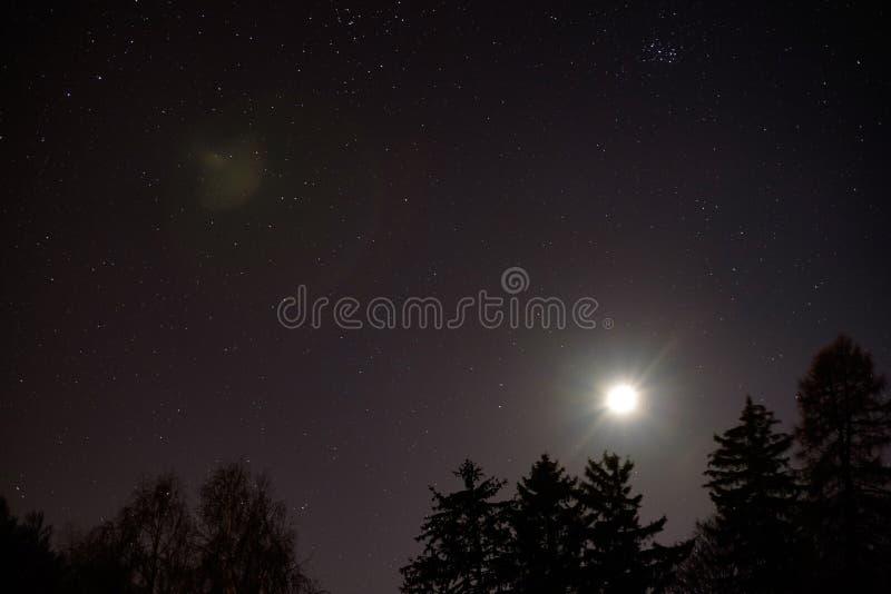 Maan boven een bos royalty-vrije stock foto's
