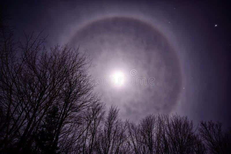 Maan Corona Over Treetops royalty-vrije stock fotografie