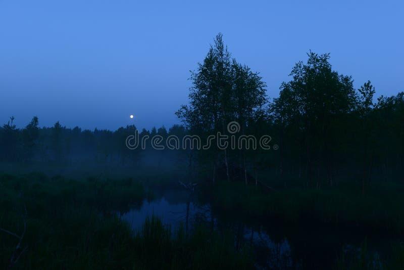 Maan in de blauwe nachthemel boven het bos stock fotografie
