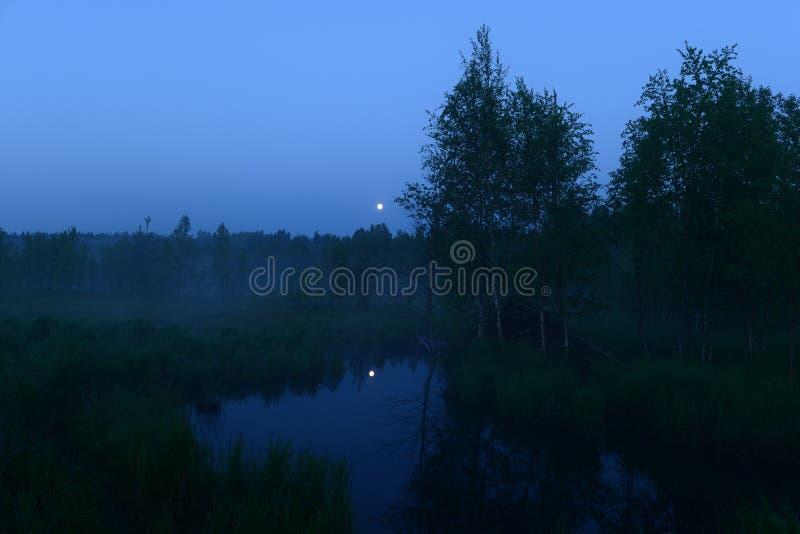 Maan in de duidelijke blauwe nachthemel over het bosmaanlicht in de waterbezinning in de bosrivier stock foto's