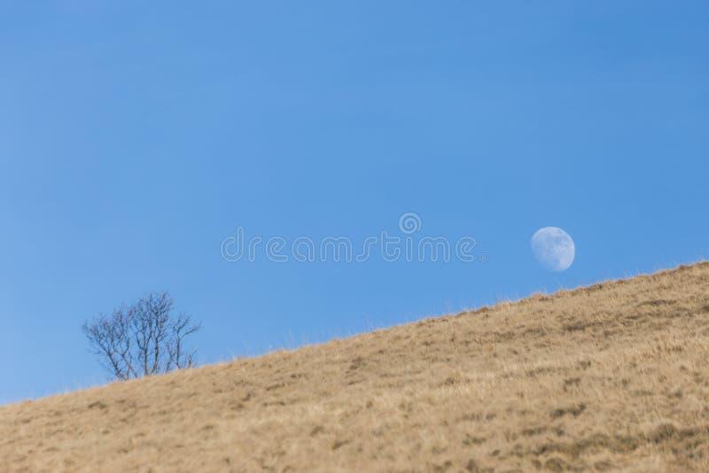 Maan die achter een heuvel dichtbij een kleine installatie, in een lege, blauwe hemel stijgen royalty-vrije stock foto