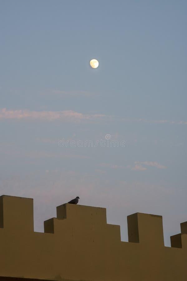 Maan die over Arabische Muur met Duif toenemen stock afbeeldingen
