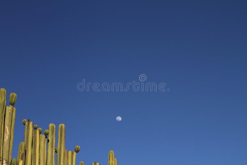 Maan over cactussen stock foto