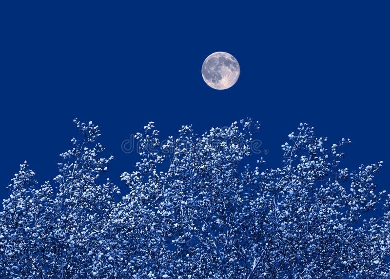 Maan over de bomen royalty-vrije stock fotografie