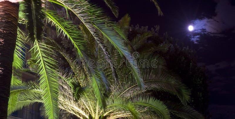 Maan over Palmen royalty-vrije stock fotografie