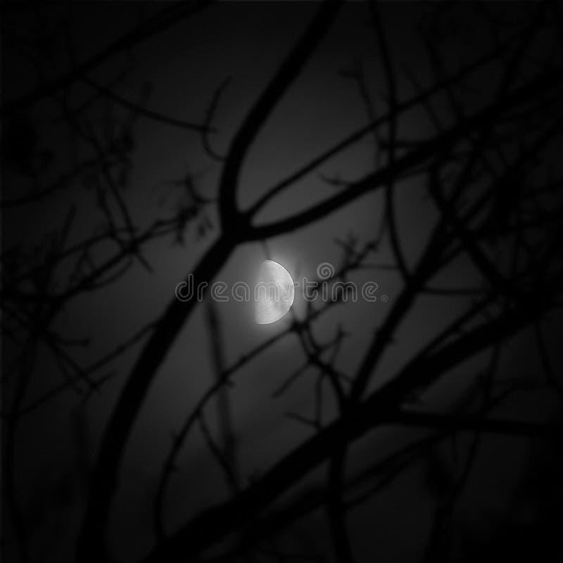Maanbeschenen Nacht royalty-vrije stock fotografie