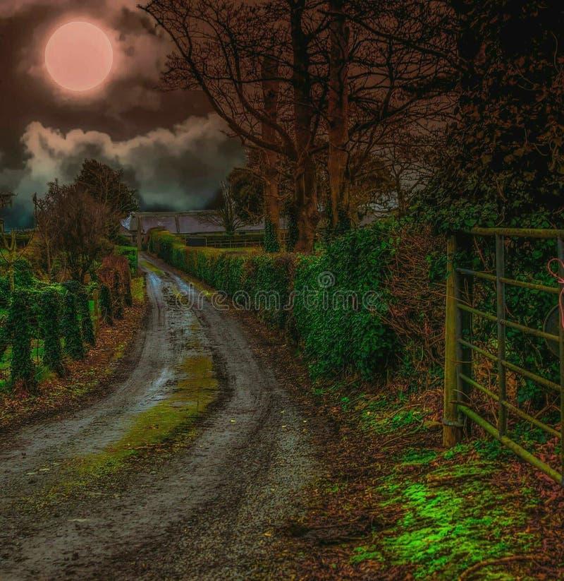 Maanbeschenen Nacht stock foto