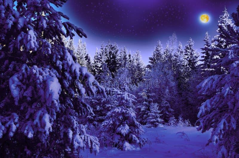 Maanbeschenen nacht in sneeuwhout stock afbeelding