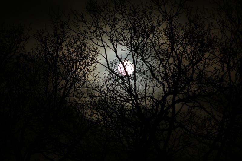 Maanlicht royalty-vrije stock foto's