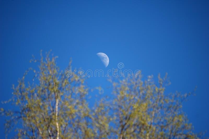 Maanlicht stock afbeeldingen