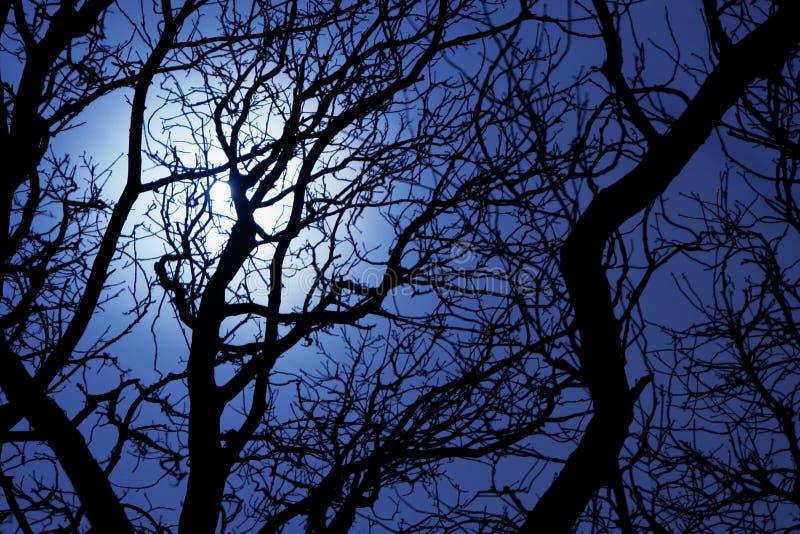 Maanlicht door takken van een boom stock fotografie