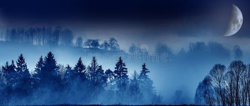 Maanmist en een bos royalty-vrije stock fotografie