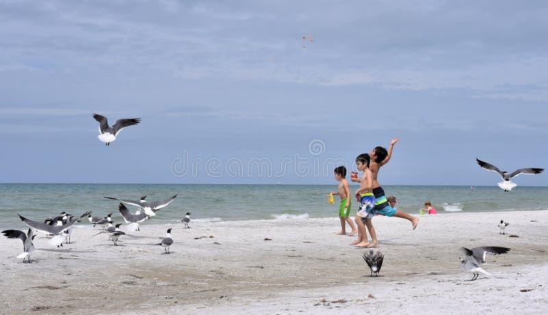 Maart 2019, Indisch Rotsenstrand, Florida - drie kinderen op de oorspronkelijke kusten van een het gebiedsstrand van Tamper voede stock afbeeldingen
