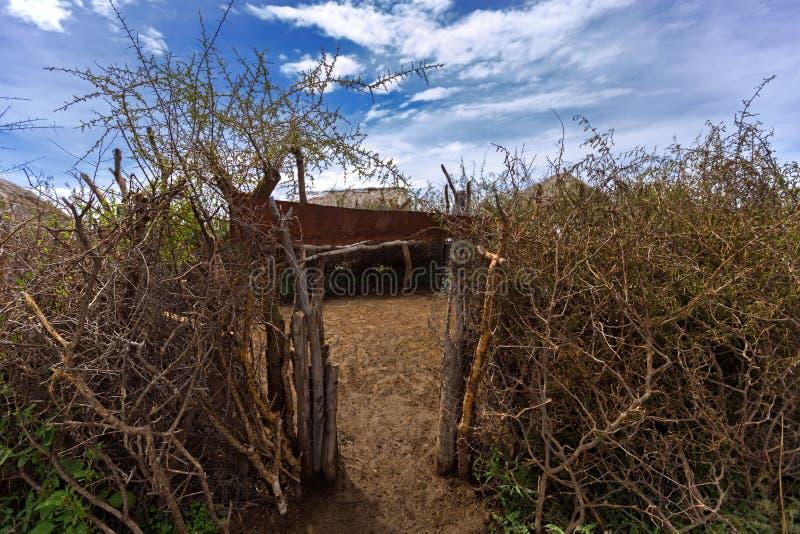 Maasai cierniowaty ogrodzenie robić Akacjowe gałąź chować bydlęcia od zwierząt przy nocą w Tanzania obraz royalty free