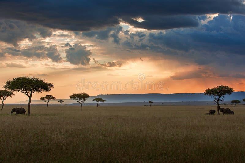 Maasai Mara solnedgånglandskap royaltyfri fotografi