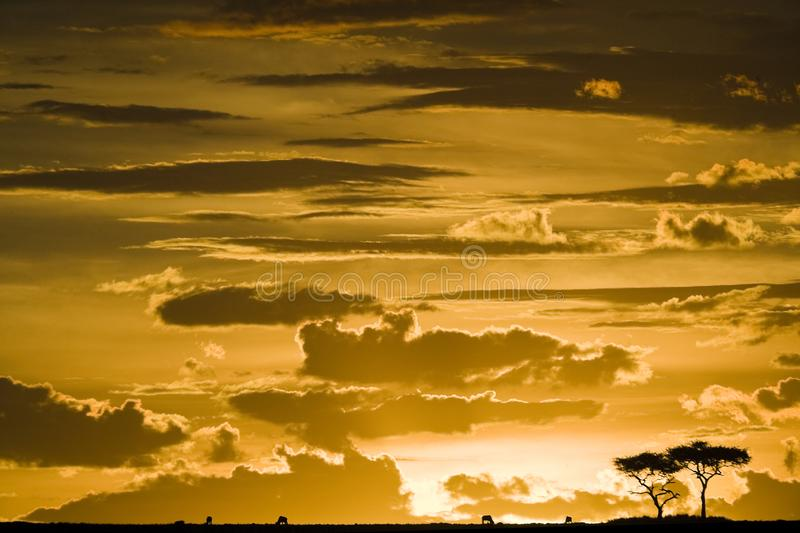 Maasai Mara sunset with tree silhouette royalty free stock images