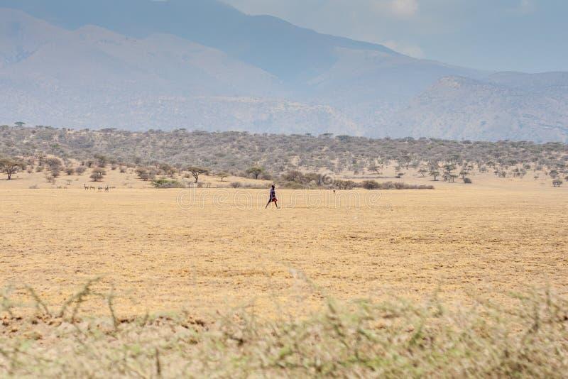 Maasai in open land royalty free stock image