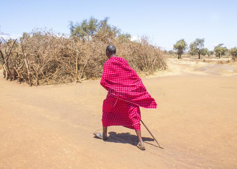 Maasai walking away towards homestead royalty free stock images