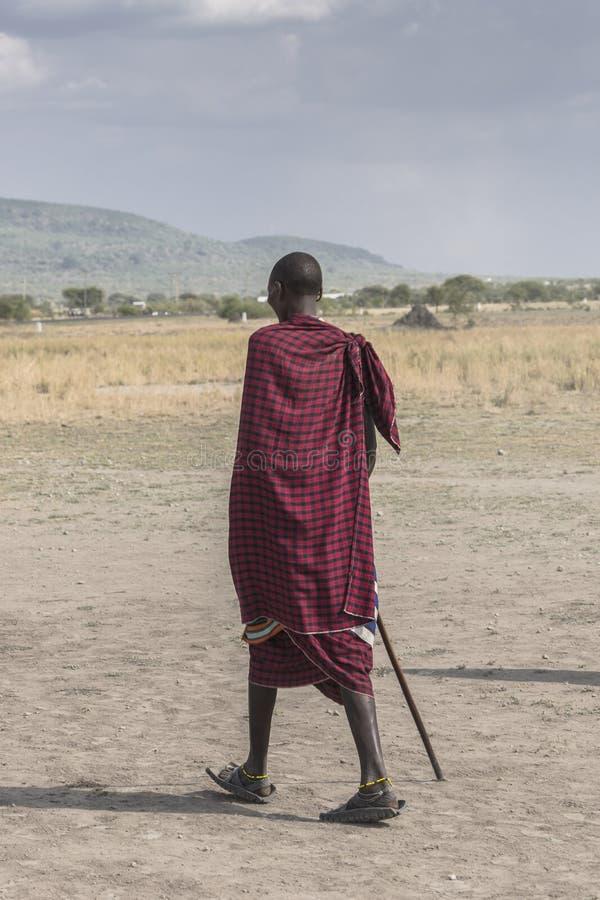 Maasai Warrior stock image