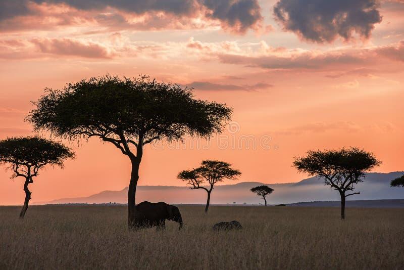 Maasaimara zonsonderganglandschap stock foto's