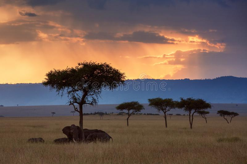 Maasaimara zonsonderganglandschap royalty-vrije stock foto's