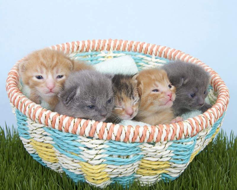 Maca dos gatinhos recém-nascidos duas semanas velhos na cesta imagem de stock