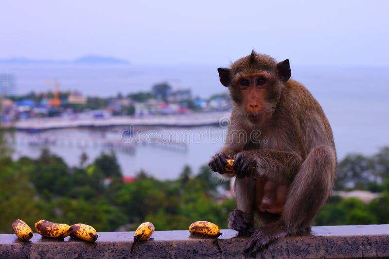 Macaco imagens de stock royalty free