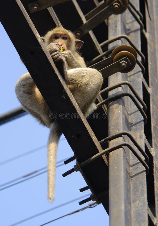 Macaco acima fotografia de stock