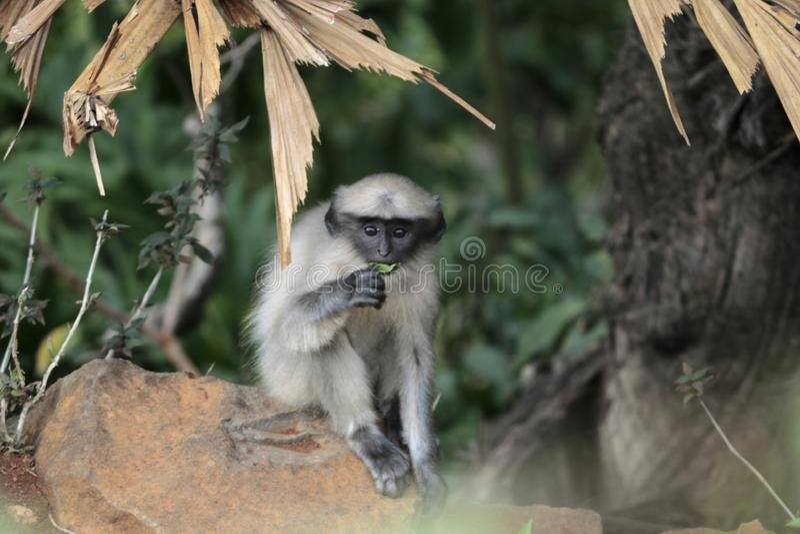 Macaco bonito foto de stock royalty free