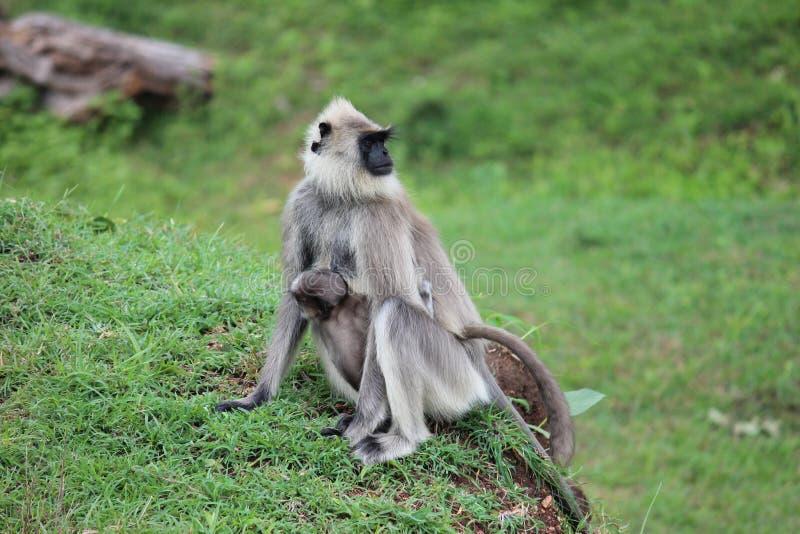 Macaco com bebê fotos de stock royalty free