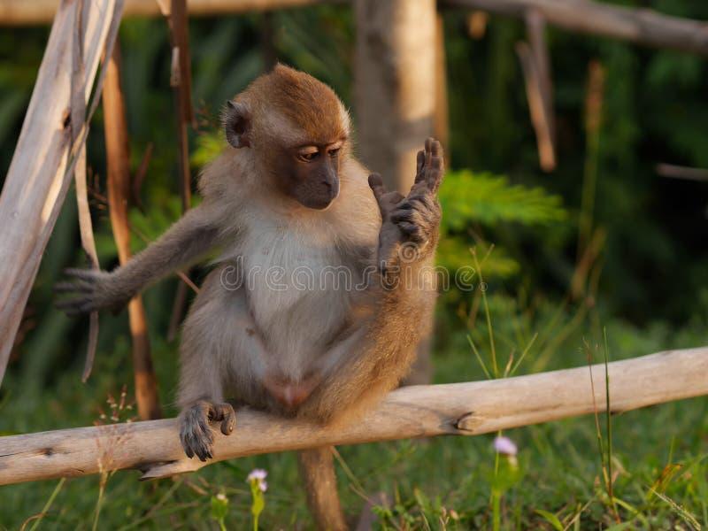 Macaco da mãe foto de stock
