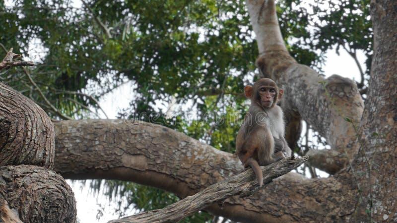 Macaco de esquilo no habitat natural, na floresta tropical e na selva, jogando fotos de stock