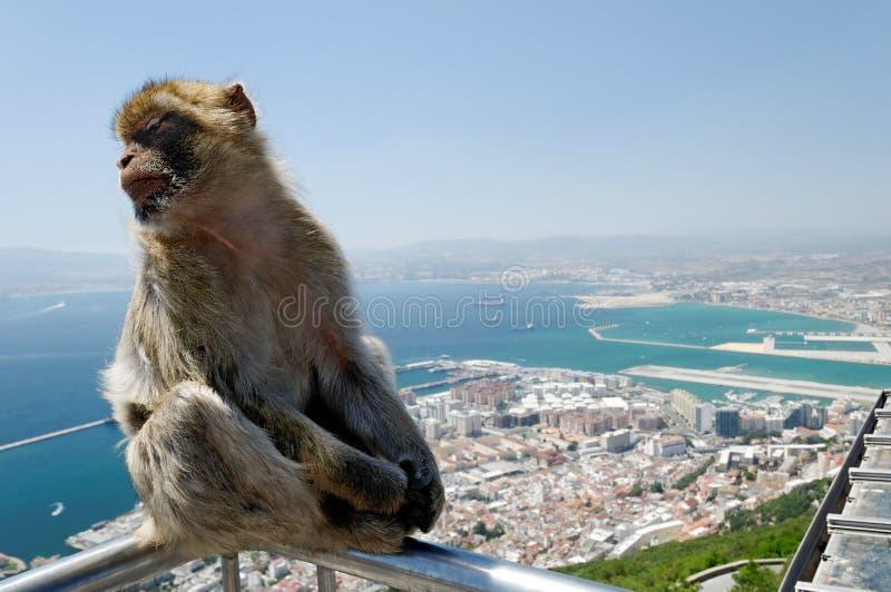 Macaco de Macaque imagem de stock