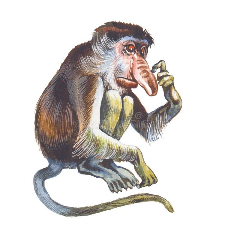 Macaco de Proboscis (larvatus do Nasalis) ilustração stock