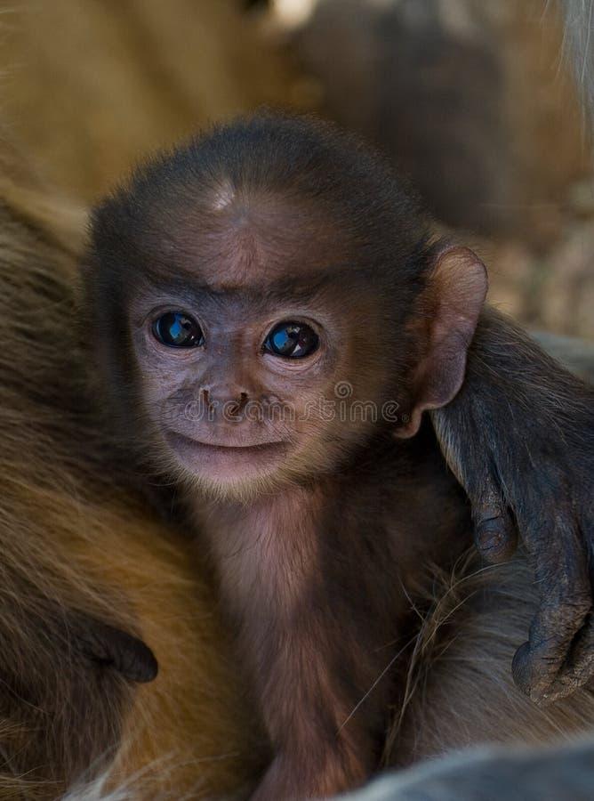 Macaco do bebê fotos de stock royalty free