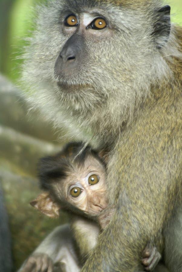 Macaco do bebê com matriz fotografia de stock royalty free