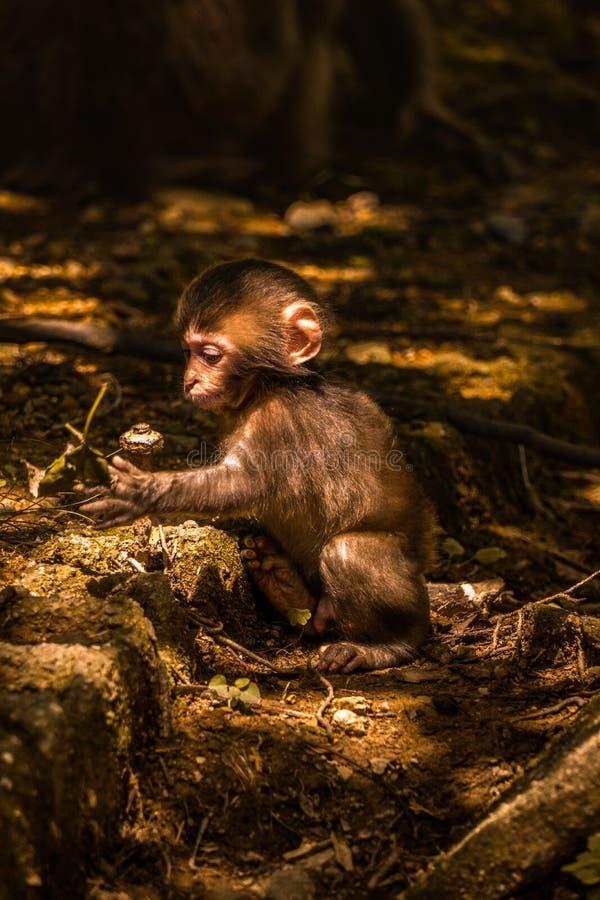 Macaco do bebê que joga com flores em uma floresta imagens de stock royalty free