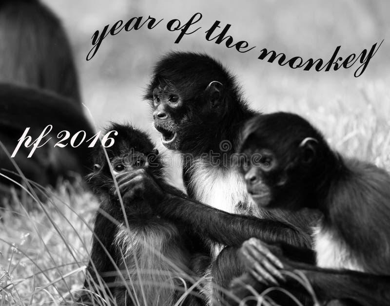 Macaco do PF 2016 foto de stock