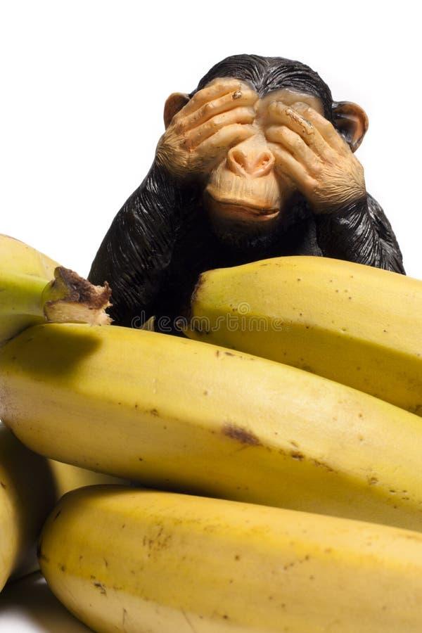 Macaco em uma dieta fotos de stock royalty free