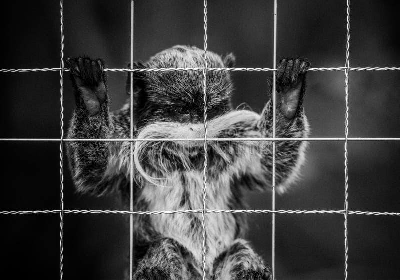 Macaco em uma gaiola fotos de stock royalty free
