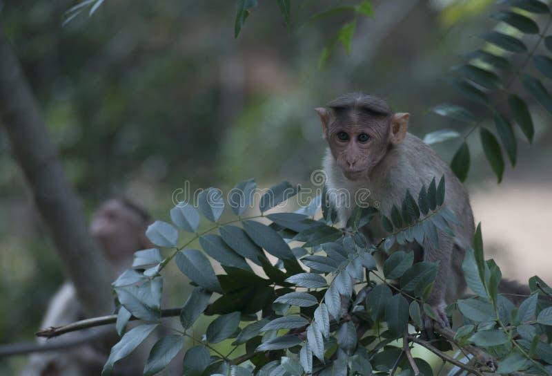 Macaco em uma ?rvore fotos de stock