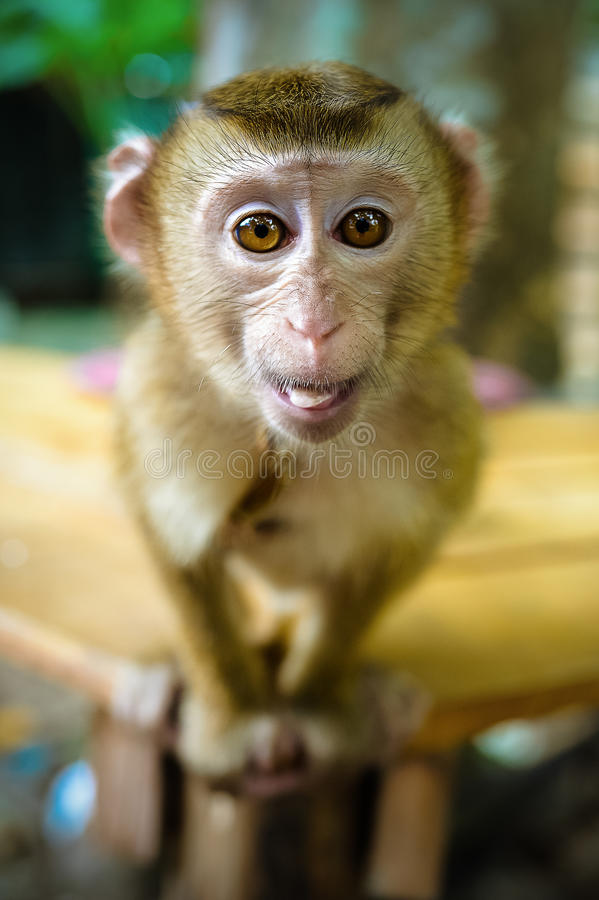 Macaco engraçado fotos de stock royalty free