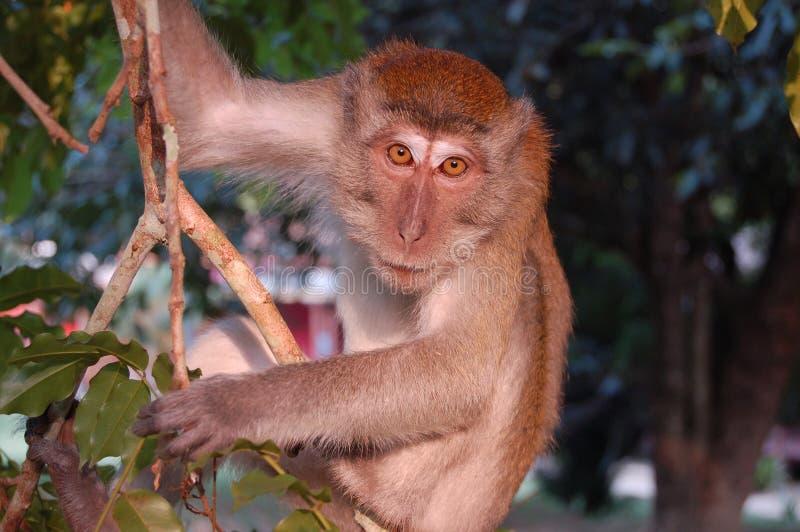 Macaco na árvore fotografia de stock royalty free