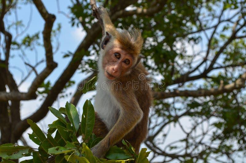 Macaco na árvore imagem de stock royalty free