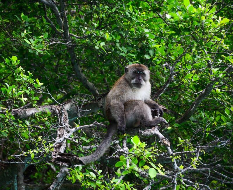 Macaco na floresta profunda fotos de stock
