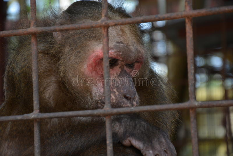 Macaco na gaiola foto de stock