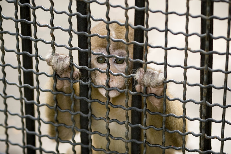 Macaco na gaiola imagem de stock